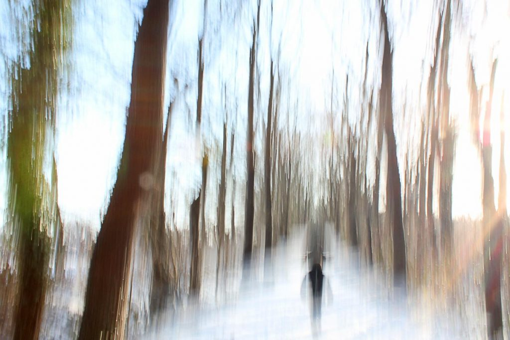 Das Geheimnis des Winterwaldes