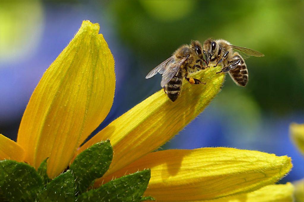 Geschichten von Bienenzauber und Honigträumen